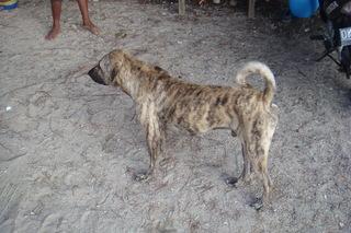 DSC01192犬.JPG