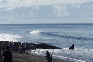 DSC00614巨大なクジラが打ちあがってる.JPG