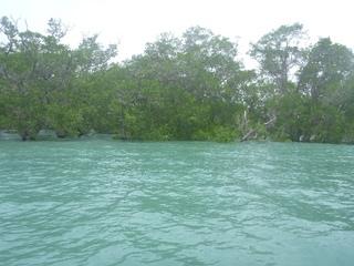 海の中に木.JPG