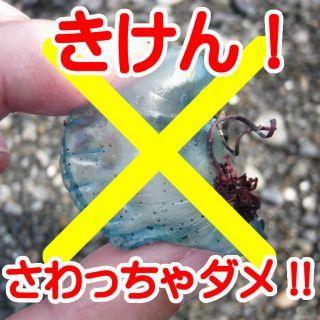 sm-katsuonoeboshi_kiken.jpg